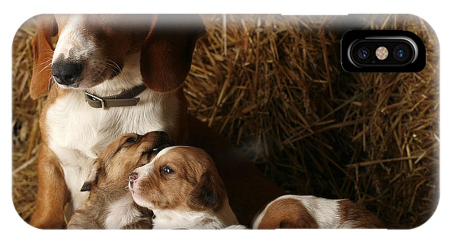 Animal IPhone X Case featuring the photograph Puppies by Rafa Rivas