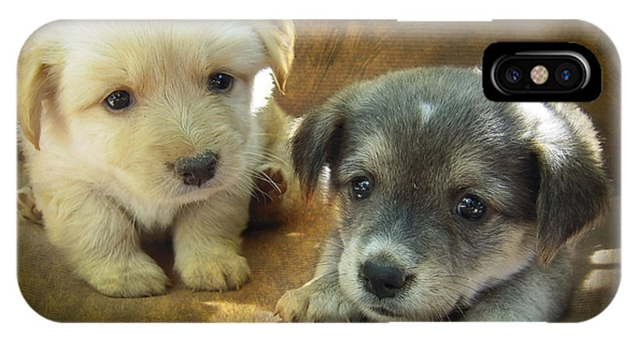 Adorable IPhone X Case featuring the photograph Puppies by Svetlana Sewell