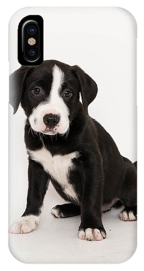 Puppy IPhone X / XS Case featuring the photograph Puppy Love by Tim Wilson