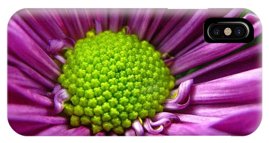 Flower IPhone Case featuring the photograph Purple And Green by Rhonda Barrett