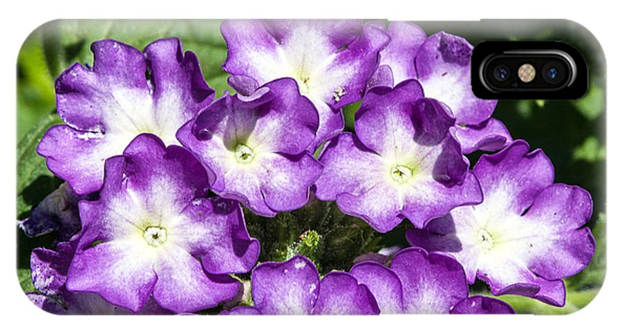 Flower IPhone X Case featuring the photograph Purple And White Bouquet by John Haldane