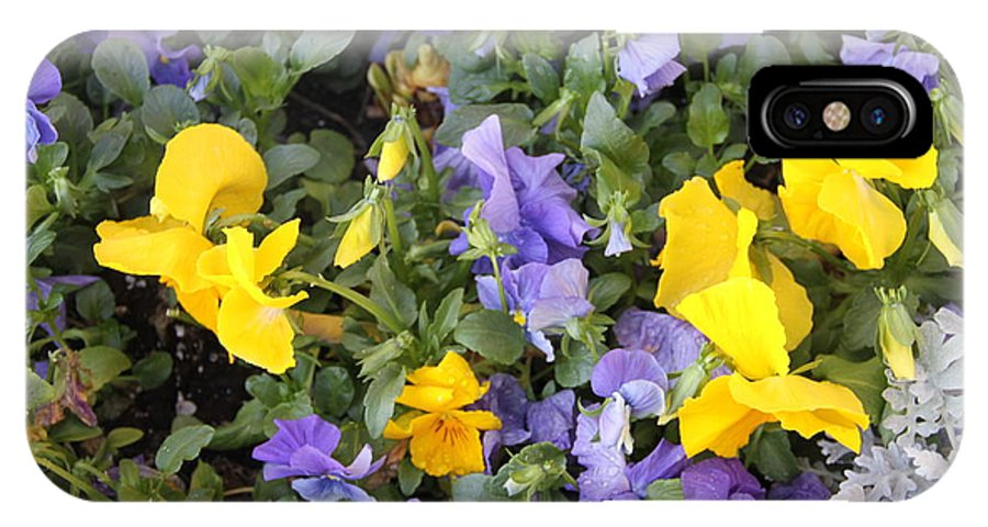 Purple Flowers IPhone X / XS Case featuring the photograph Purple And Yellow Flowers by Rebecca Pavelka