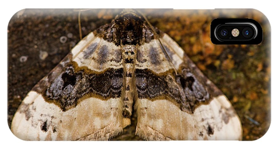 Insect IPhone X Case featuring the photograph Purple Bar Cosmorhoe Ocellata by Gabor Pozsgai