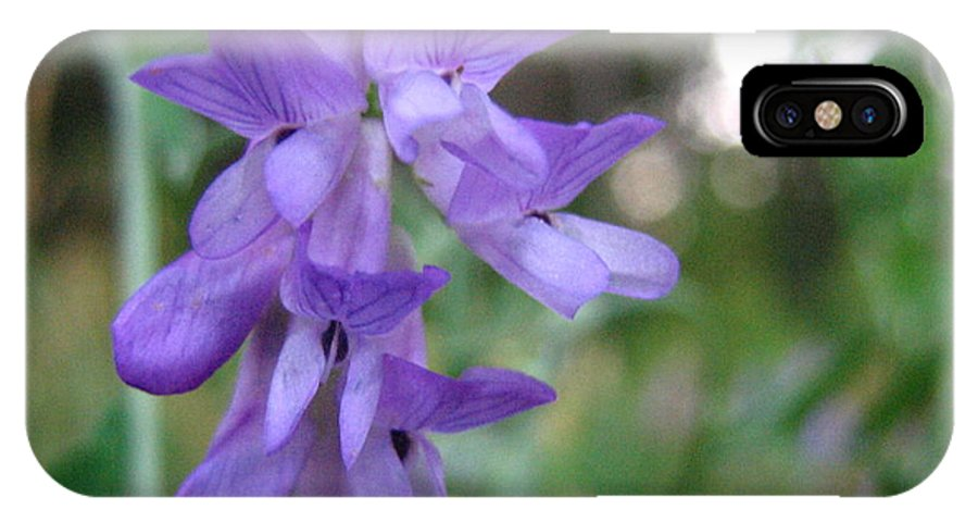 Purple IPhone Case featuring the photograph Purple Beauty by Melissa Parks