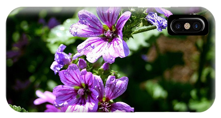 Purple Blossoms IPhone X Case featuring the photograph Purple Blossoms by Charlene Cox