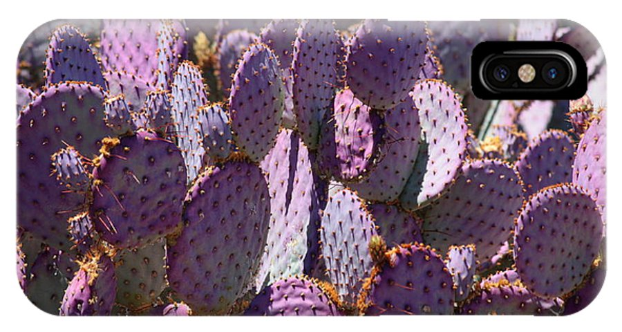 Purple Cacti IPhone X Case featuring the photograph Purple Cacti by Carol Groenen