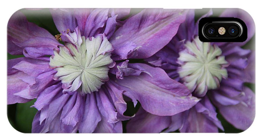 Purple Clematis IPhone X / XS Case featuring the photograph Purple Clematis 2 by Rebecca Pavelka