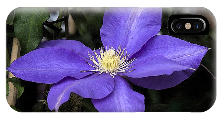 Purple IPhone X Case featuring the photograph Purple Clematis by Jim And Emily Bush