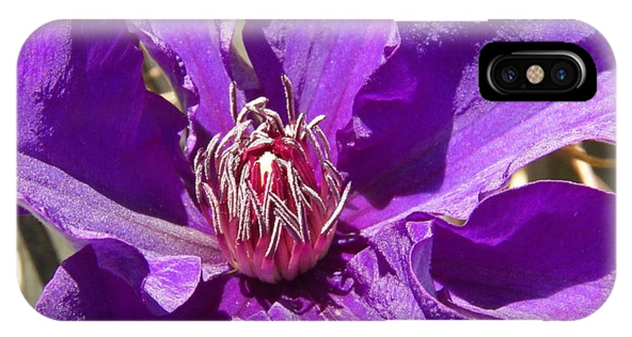Flower IPhone X Case featuring the photograph Purple Clematis IIi by Corinne Elizabeth Cowherd