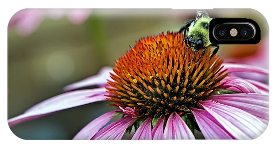 Macro IPhone X Case featuring the photograph Purple Cone Flower And Bee by Al Mueller