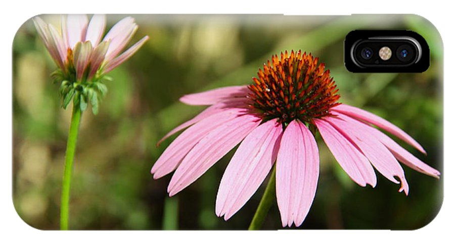 Purple Cone Flower IPhone X Case featuring the photograph Purple Cone Flower by Barbara Bowen