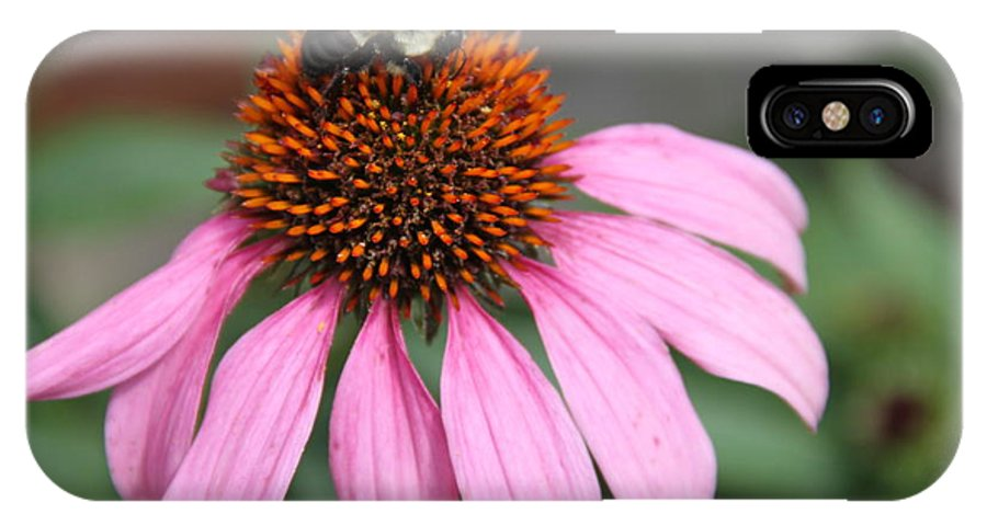 Purple Cone Flower IPhone X / XS Case featuring the photograph Purple Cone Flower by Rebecca Pavelka