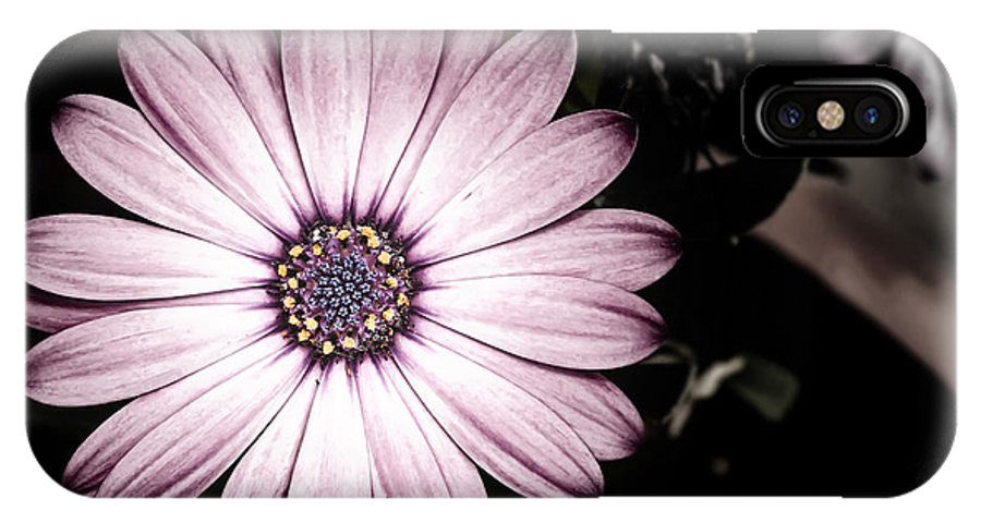 Flower IPhone X Case featuring the photograph Purple Flower by Al Mueller