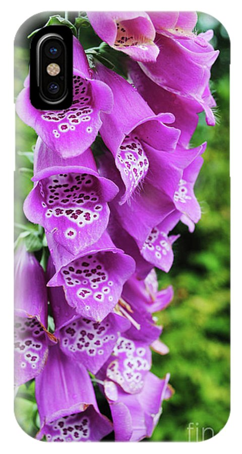 Flower IPhone X Case featuring the photograph Purple Foxglove by Alicia Espinosa