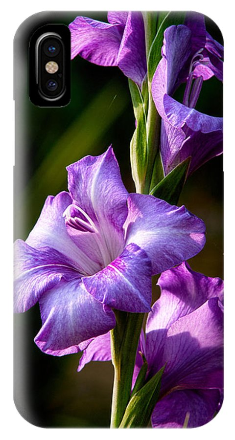 Gladiolas IPhone X Case featuring the photograph Purple Glads by Christopher Holmes