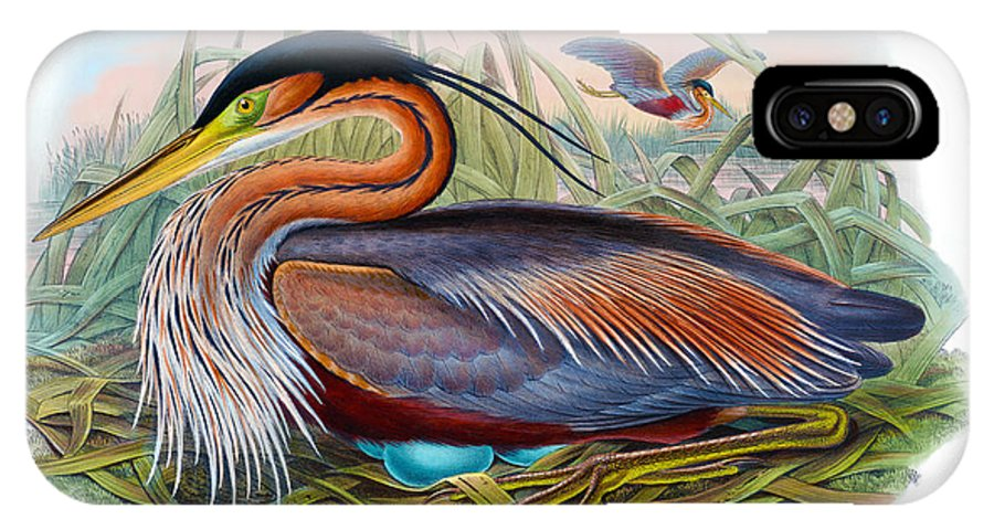 Purple Heron IPhone X Case featuring the painting Purple Heron Antique Bird Print John Gould The Birds Of Great Britain by Orchard Arts
