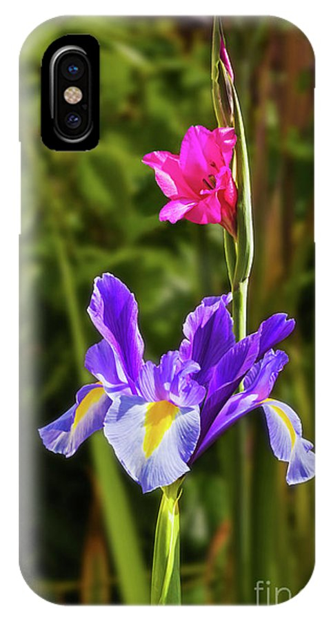 Flower IPhone X Case featuring the photograph Purple Iris And Gladioli Byzantinus by Terri Waters