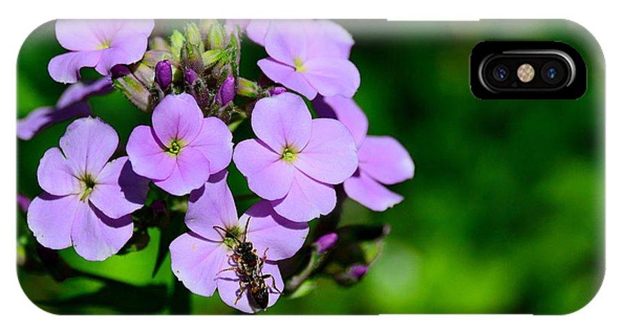 Purple IPhone X Case featuring the photograph Purple by Jeffery Fannin
