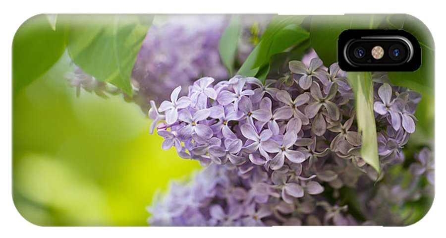 Lilac IPhone X Case featuring the photograph Purple Lilac by Nailia Schwarz