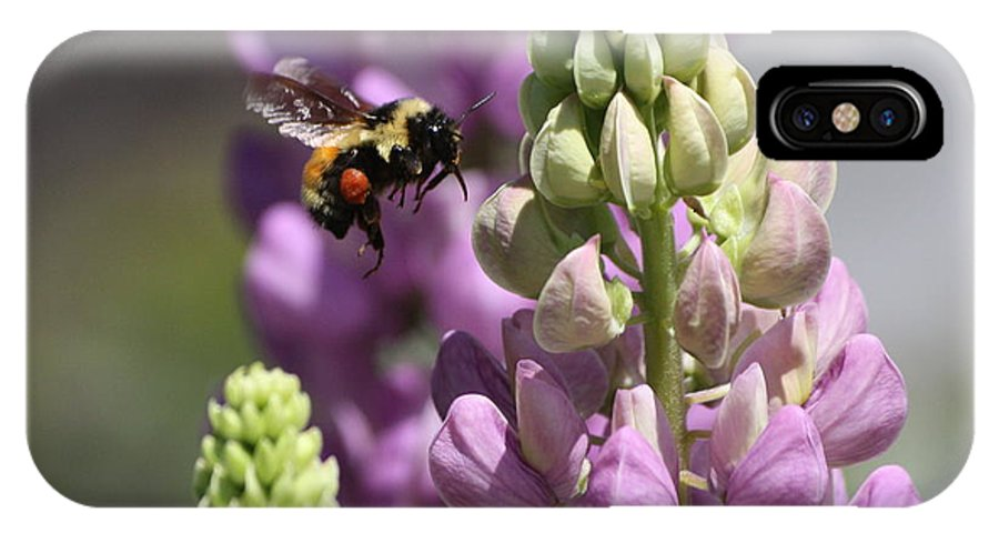 Bee IPhone X Case featuring the photograph Purple Lupine Bee 4 by Marjorie Imbeau