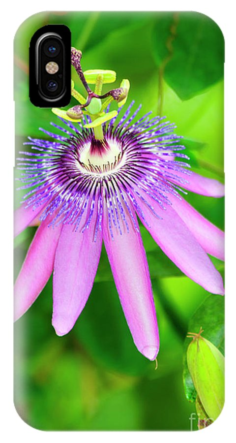 Passiflora IPhone X Case featuring the photograph Purple Passion Vine by Genevieve Vallee