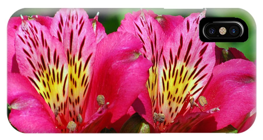 Peruvian IPhone Case featuring the photograph Purple Peruvian Lily by Amy Fose