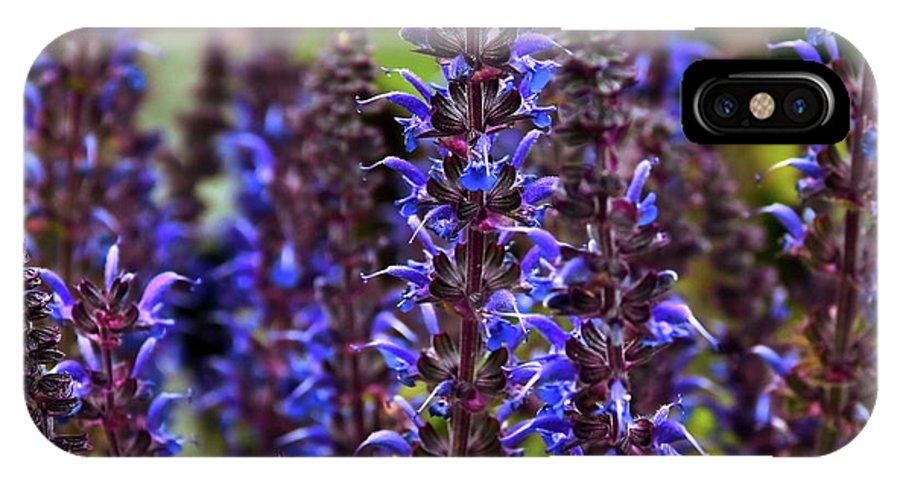Salvia IPhone X Case featuring the photograph Purple Salvia Sage by Marjorie Imbeau