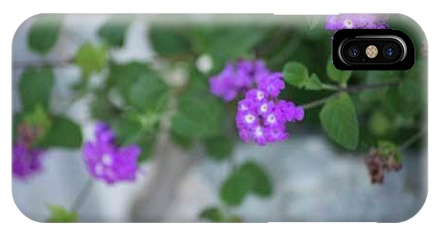 Purple IPhone X Case featuring the photograph Purple Verbena by Renee Bonner