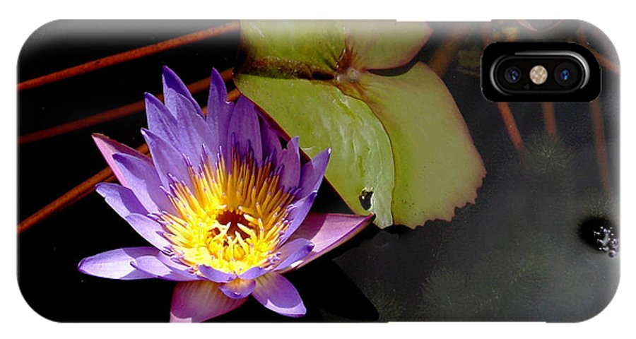 Water Lily IPhone X Case featuring the photograph Purple Water Lily by Rosalie Scanlon