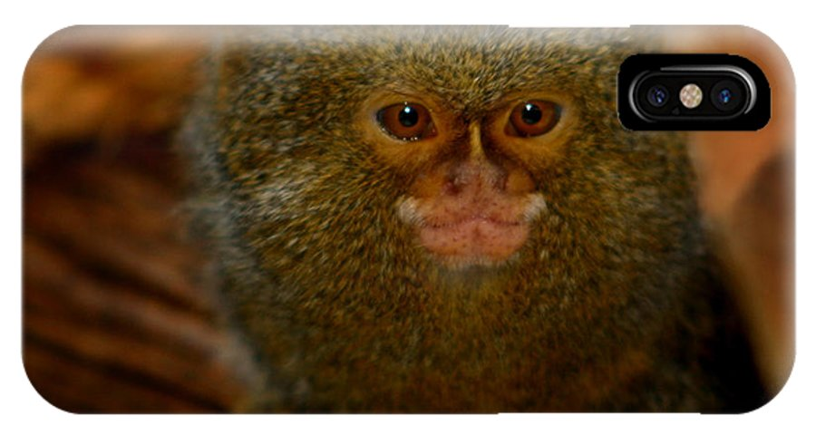 Pygmy Marmoset IPhone X Case featuring the photograph Pygmy Marmoset by Anthony Jones