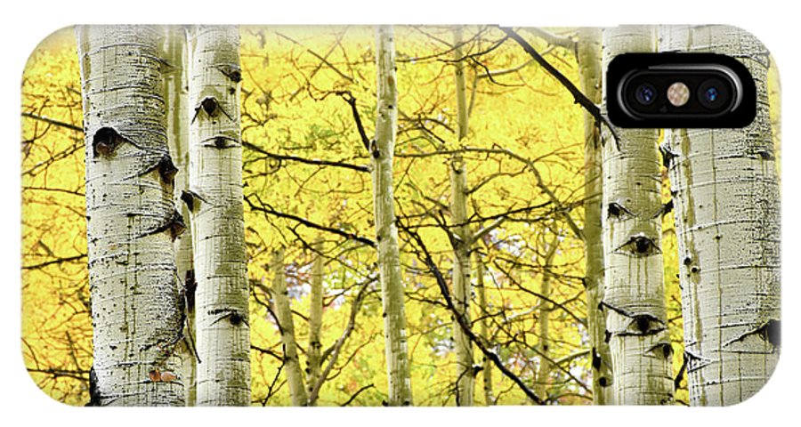 IPhone X Case featuring the photograph Quaking Aspen Fall by Heath Bollock