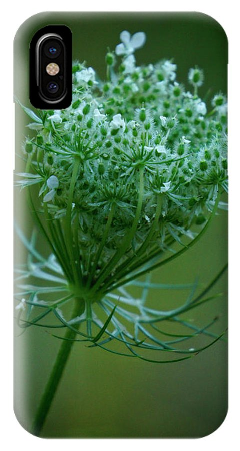 Queen Annes Lace IPhone X Case featuring the photograph Queen Annes Lace - 365-164 by Inge Riis McDonald