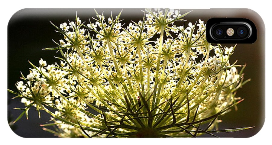 Queen Anne's Lace IPhone X Case featuring the photograph Queen Anne's Lace by Diane Merkle