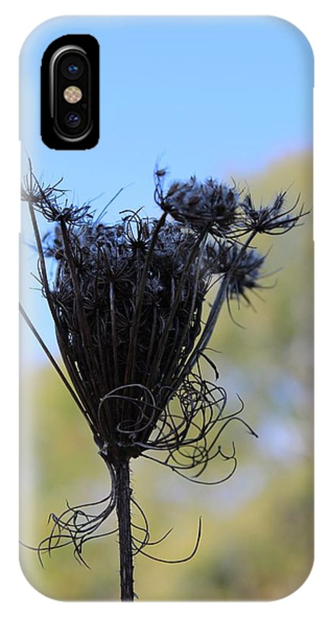 Flower IPhone X Case featuring the photograph Queen Annes Lace In Autumn by Modern Art