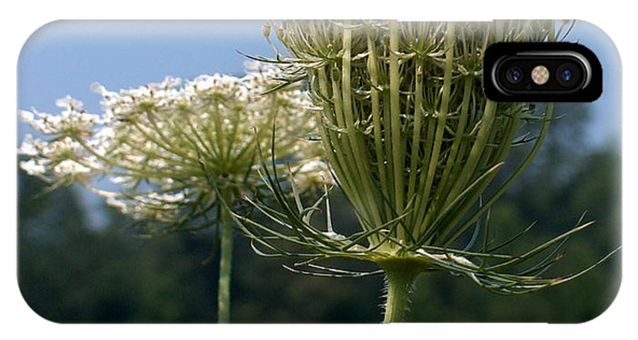 Queen Anne's Lace IPhone X Case featuring the photograph Queen Anne's Lace by Racquel Morgan