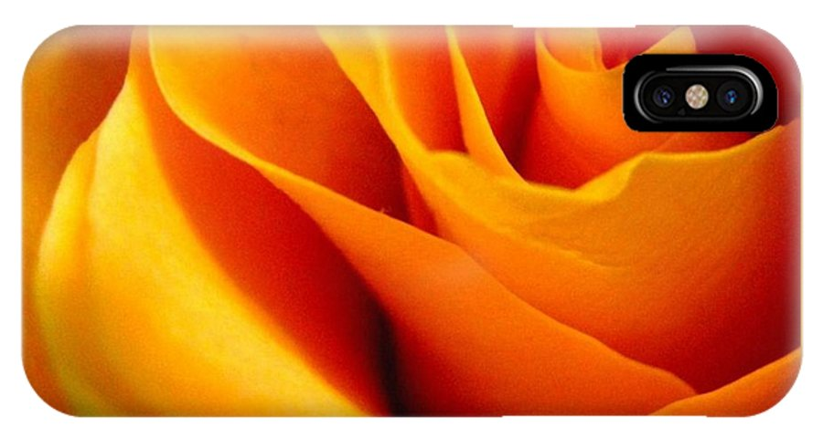 Rose IPhone X Case featuring the photograph Queen Rose by Rhonda Barrett