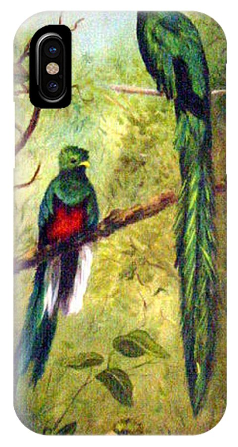 Landscape IPhone X Case featuring the painting Quetzels by Anne Kushnick