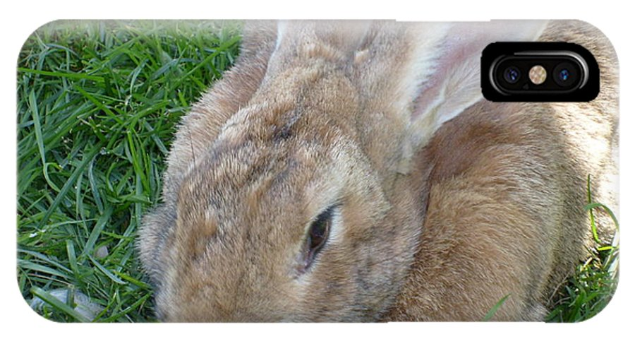 Rabbit IPhone X Case featuring the photograph Rabbit Head On by Melissa Parks