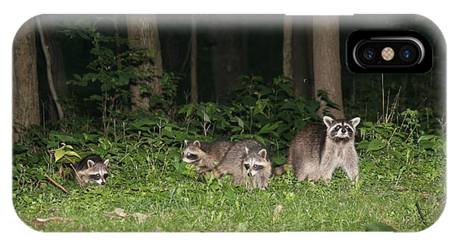 Racoon IPhone X Case featuring the photograph Raccoon Family by George Jones
