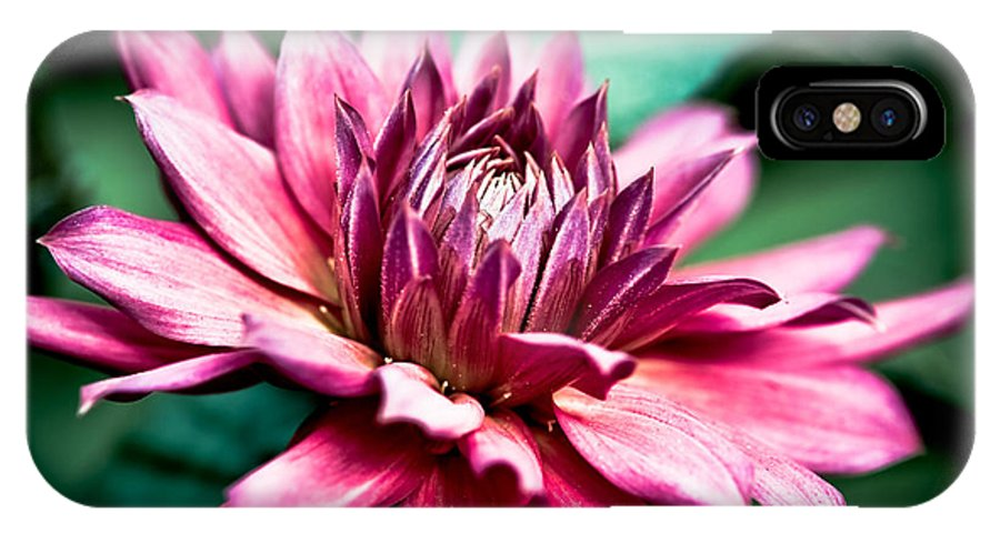 Asteraceae IPhone X Case featuring the photograph Radiant Dahlia by Venetta Archer