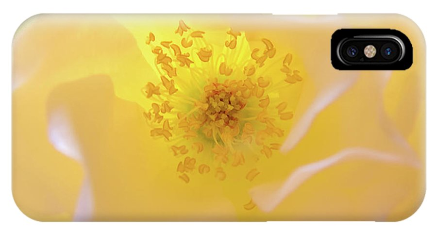 Flower IPhone Case featuring the photograph Radiant Gift by Julia Hiebaum