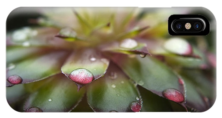 Cactus IPhone X Case featuring the photograph Rain Drop On Cactus by Steve Somerville