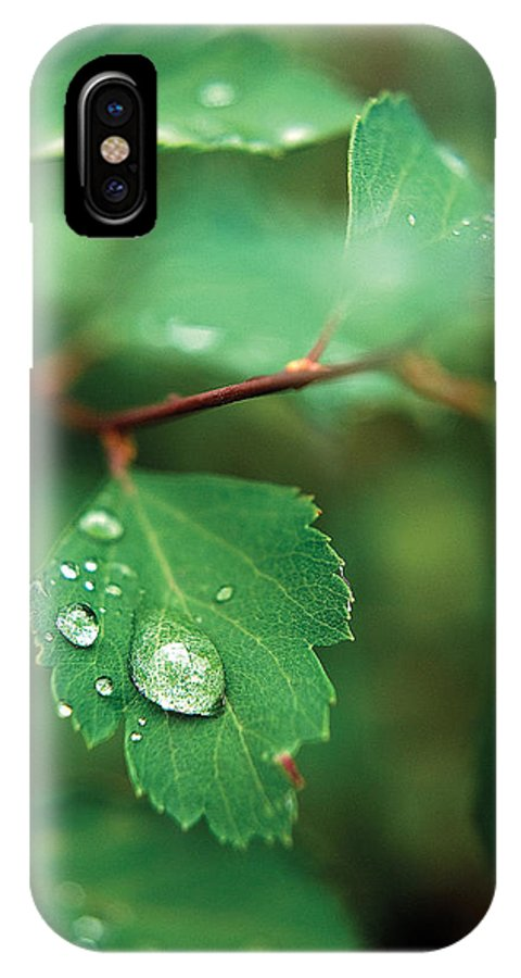 Rain IPhone X Case featuring the photograph Rain Droplet On Leaf by Steve Somerville