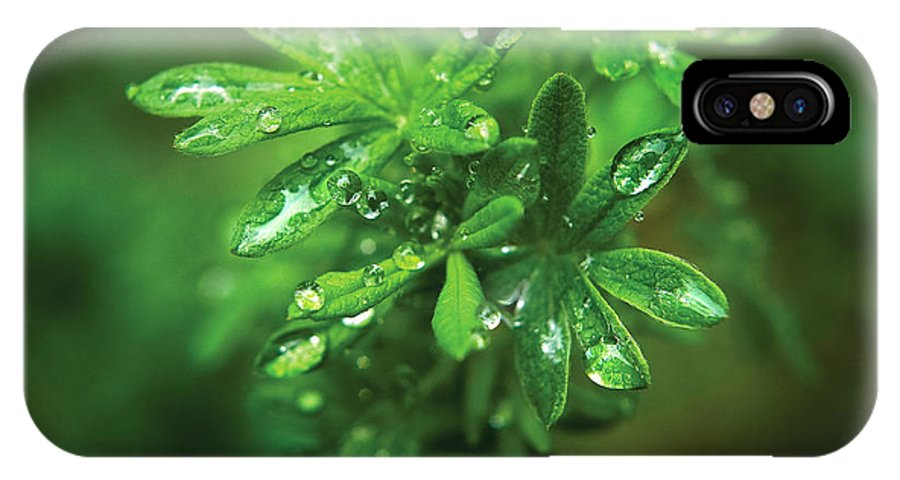 Leaves IPhone X Case featuring the photograph Rain Drops On Green Leaves by Steve Somerville