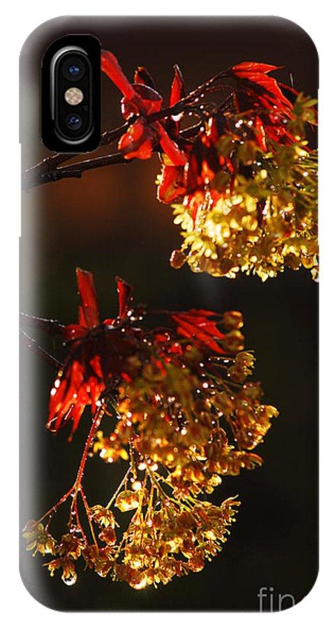 Spring IPhone Case featuring the photograph Rain Soaked Leaves-2 by Steve Somerville