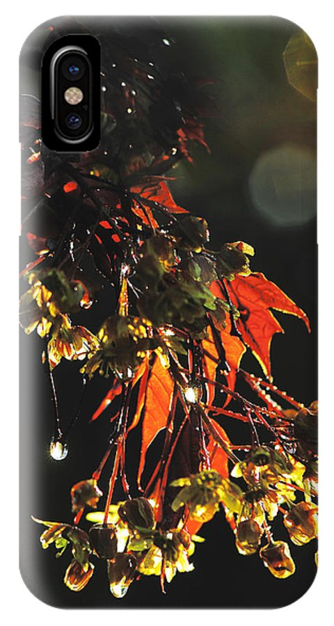 Nature IPhone X Case featuring the photograph Rain Soaked Leaves-3 by Steve Somerville