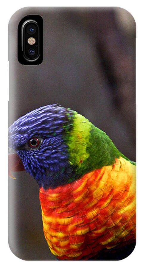 Bird Colorful IPhone X Case featuring the photograph Rainbow Lorikeet by Douglas Barnett