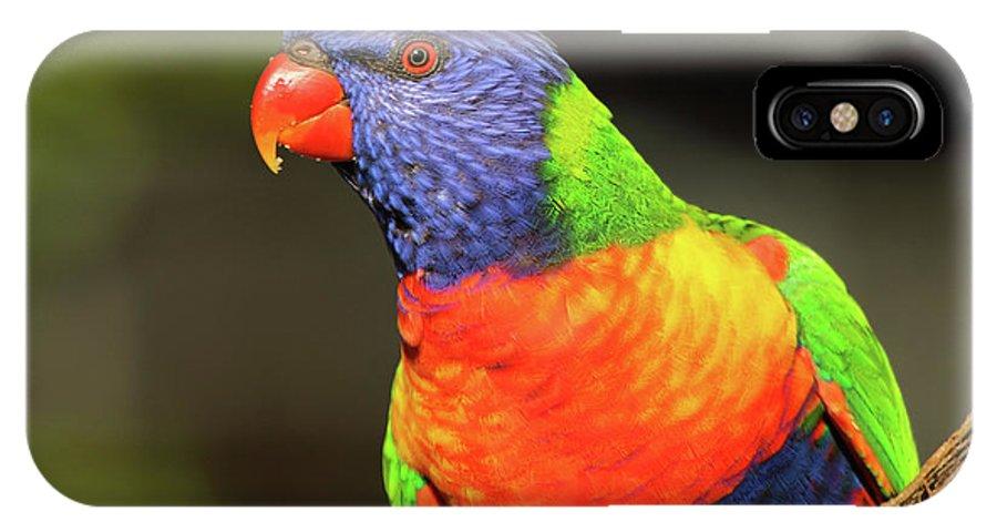 Australia IPhone X Case featuring the photograph Rainbow Lorikeet Portrait by Max Allen