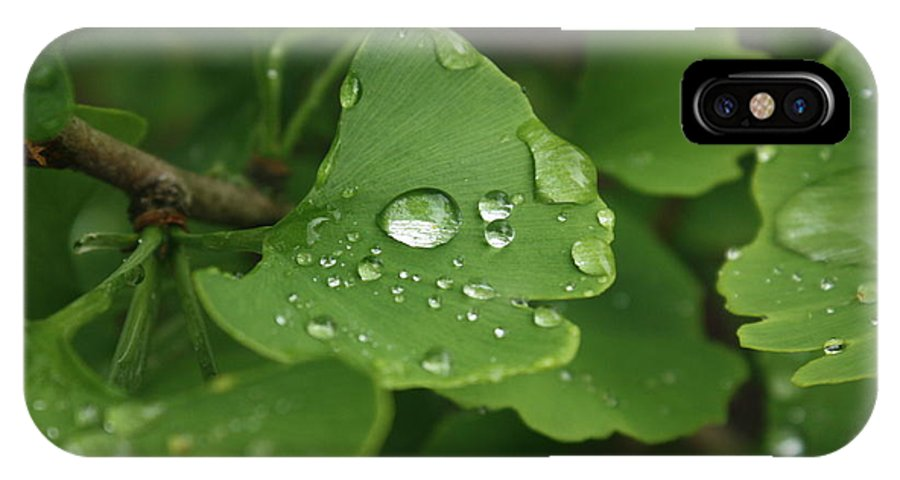 Rain IPhone X Case featuring the photograph Raindrops On Ginko And Warm Woolen Mittens by David Bearden