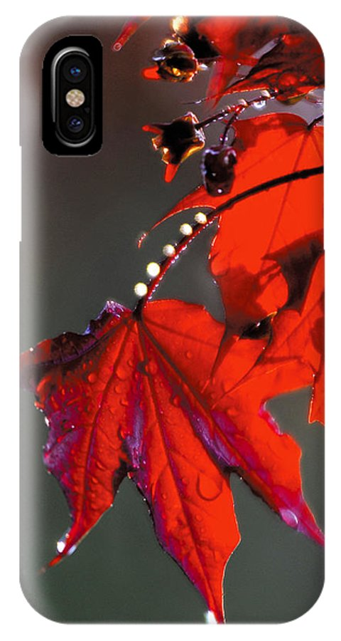 Red Leaves IPhone Case featuring the photograph Raindrops On Red Leaves by Steve Somerville